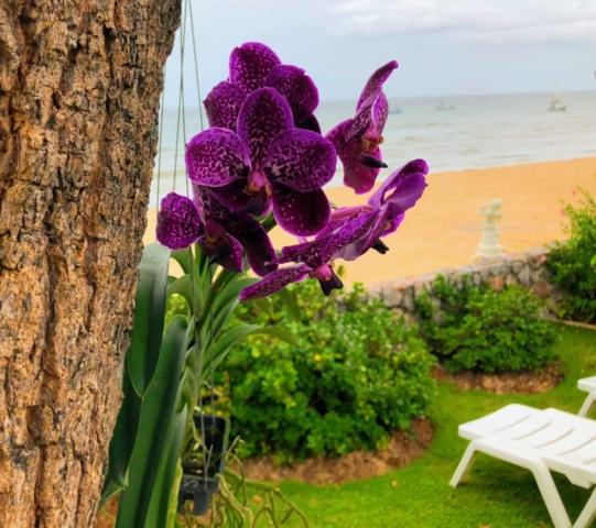 Orkide från marknaden i Dan Singhkon vid gränsen till Burma